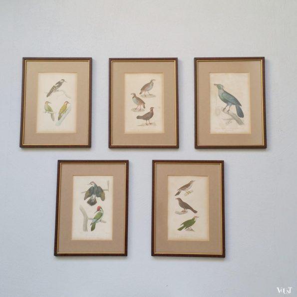 Set van 5 vintage vogelprints in houten lijstjes, jaren '60/'70